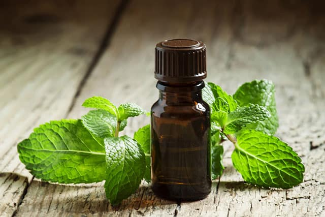 Peppermint Essential Oil and plant leaves