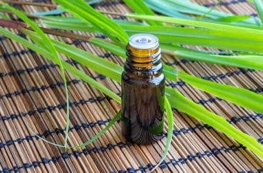 Lemongrass Essential Oil and plant
