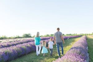 Roam the Lavender field