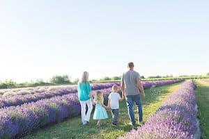 roam neob lavender