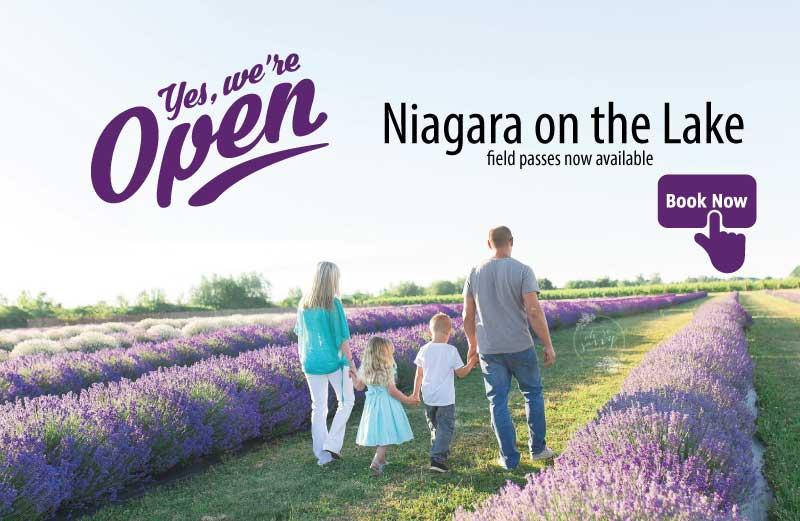 roam the lavender field