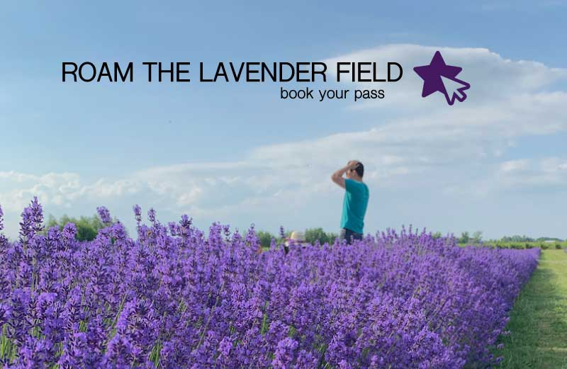 no booking roam the lavender passes