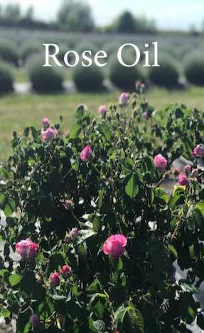 Organic Niagara Flowers
